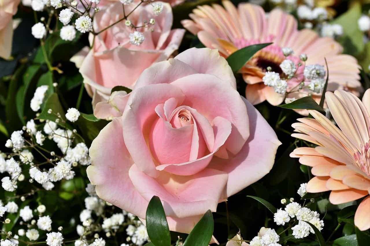 ורד וורוד