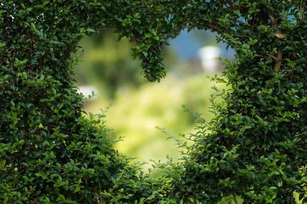 חור בשיח בצורת לב